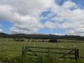Anglija, Škotska, Irska
