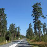 Tipična švedska cesta - gozd levo in desno
