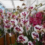 Rastlinjak z orhidejami